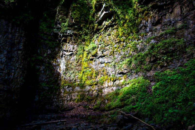 Foto de la piedra mojada cubierta con el musgo verde fresco en montañas cárpatas foto de archivo