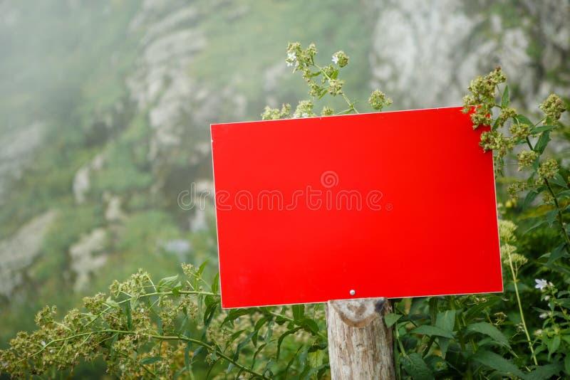 Foto de la planta, placa en blanco roja fotografía de archivo libre de regalías