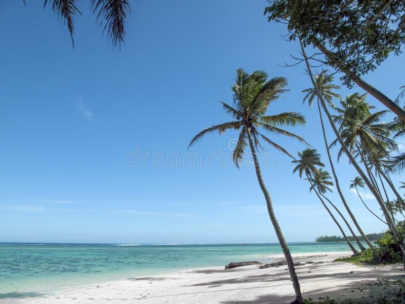 Foto de la playa de las Islas Fiji la mejor nunca Panorama natural Agua cristalina natural Altas palmas debajo del viento imagen de archivo
