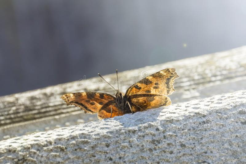 Foto de la primavera de la mariposa imagenes de archivo