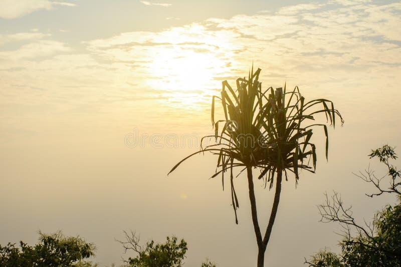 Foto de la subida hermosa del sol fotografía de archivo