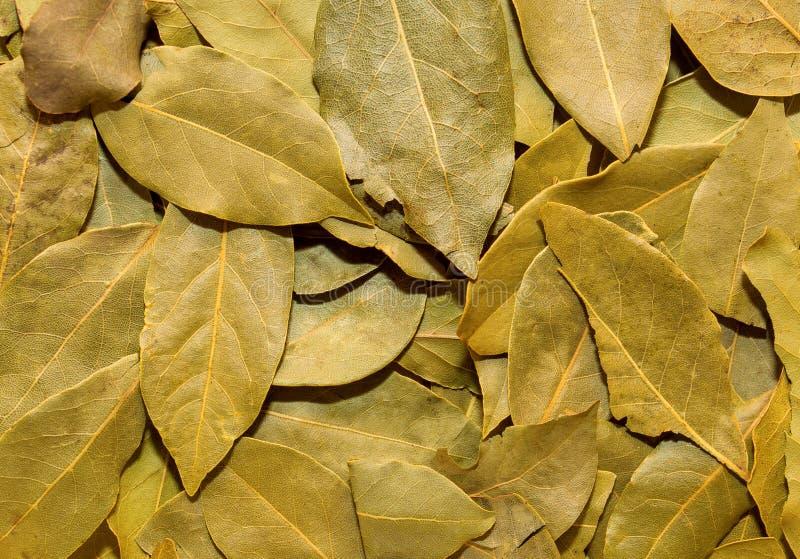 Foto de la textura del verde del primer de la hoja de laurel, fondo fotos de archivo