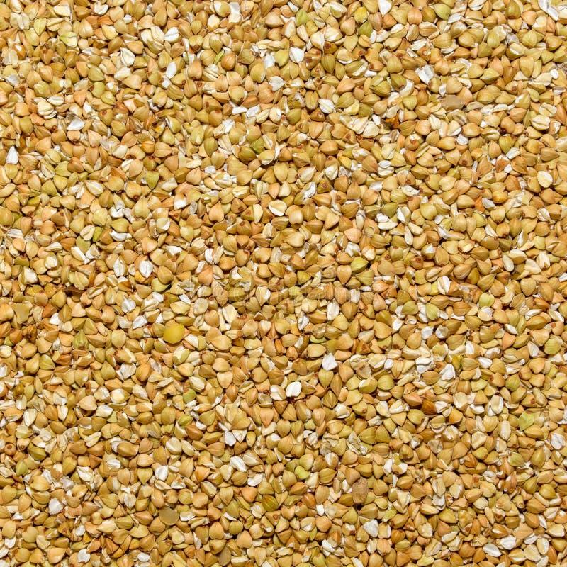 Foto de la textura de las semillas blancas del alforfón, fondo del primer fotos de archivo