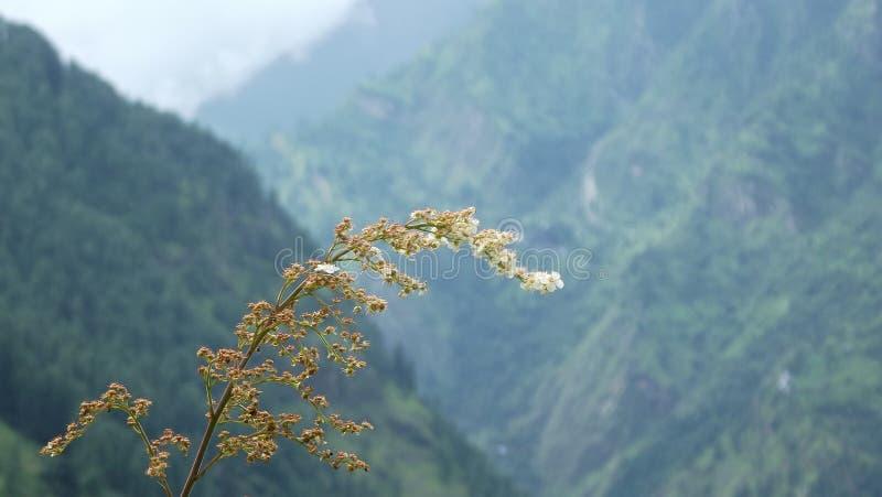 Foto de Landcape en valle parvaty imagen de archivo libre de regalías