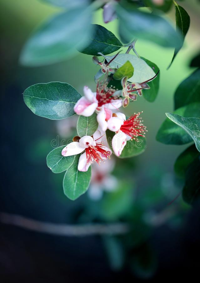 Foto de las flores exóticas hermosas macras de la montaña foto de archivo libre de regalías
