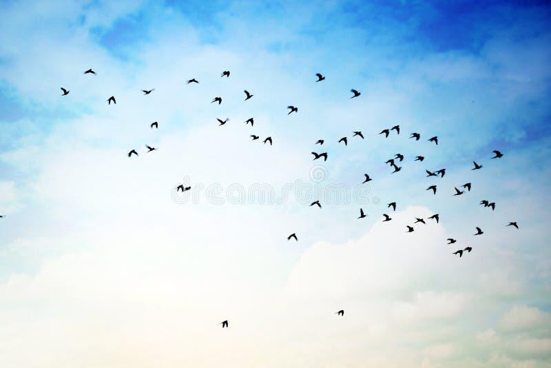 Foto de los pájaros y los pájaros de vuelo foto de archivo libre de regalías