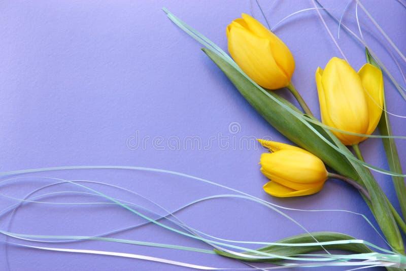 Foto de papel de tarjetas romántica de los tulipanes fotografía de archivo