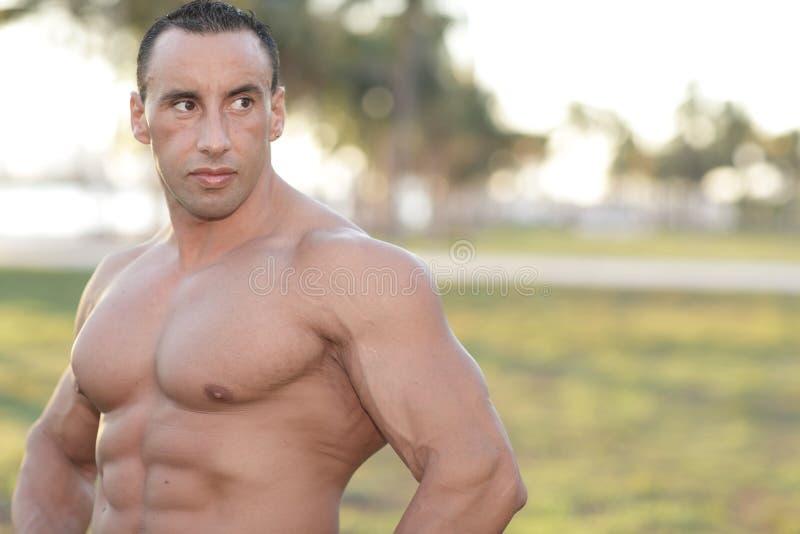 Foto de um bodybuilder descamisado foto de stock