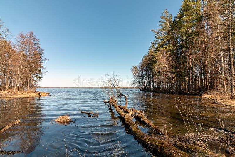 Foto de um reservatório situado perto da floresta foto de stock