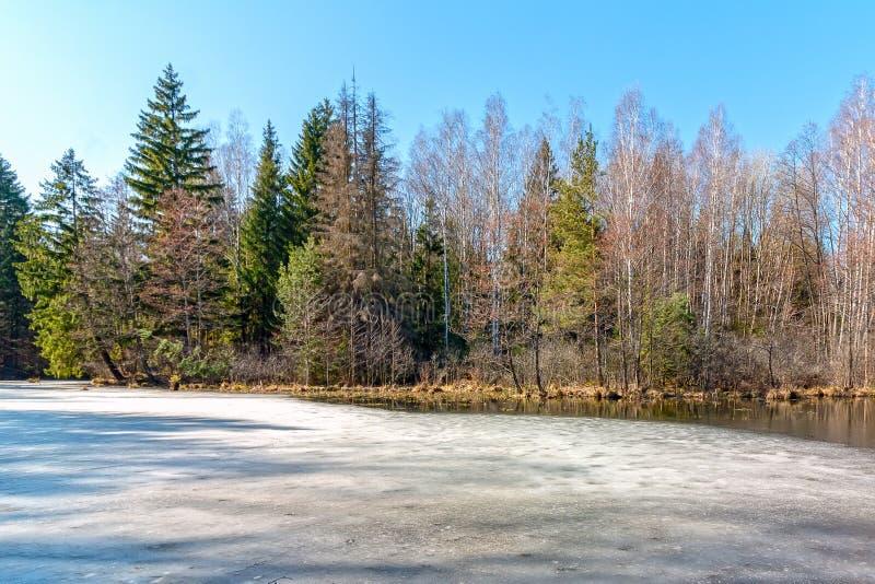 Foto de um reservat?rio situado perto da floresta fotografia de stock royalty free