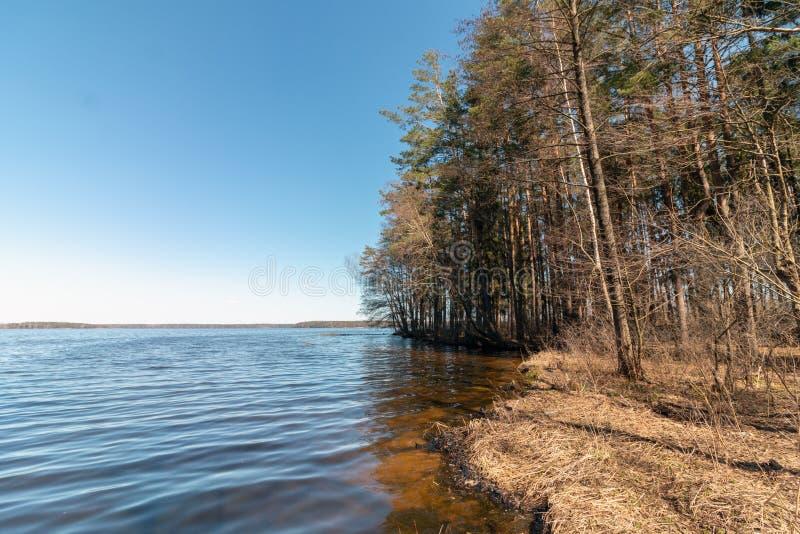 Foto de um reservat?rio situado perto da floresta imagens de stock royalty free