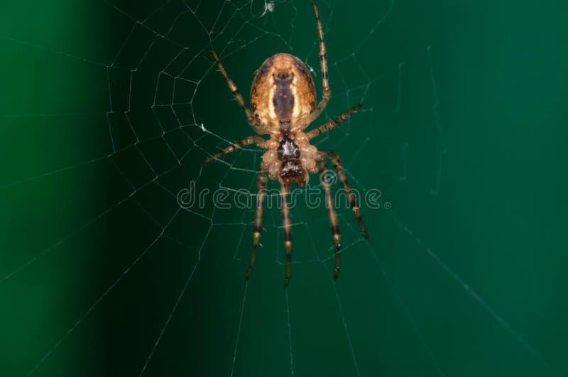Foto de uma aranha amarela em sua Web fotos de stock