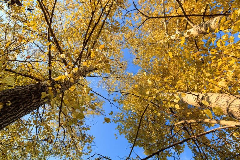 Foto de uma floresta do outono imagens de stock royalty free
