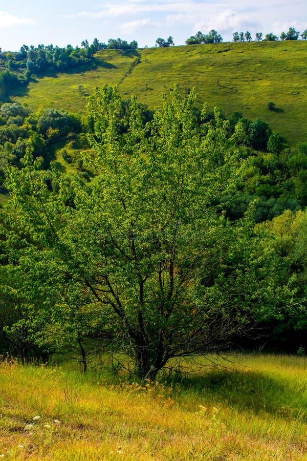 Foto de un árbol hermoso y de una hierba verde fotografía de archivo libre de regalías