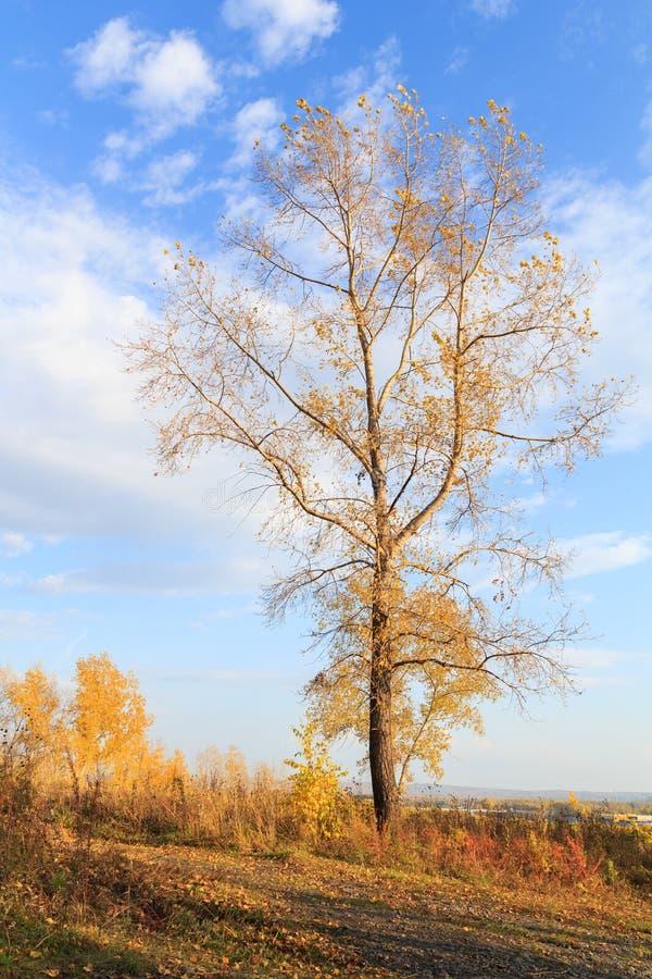 Foto de un bosque del otoño fotos de archivo