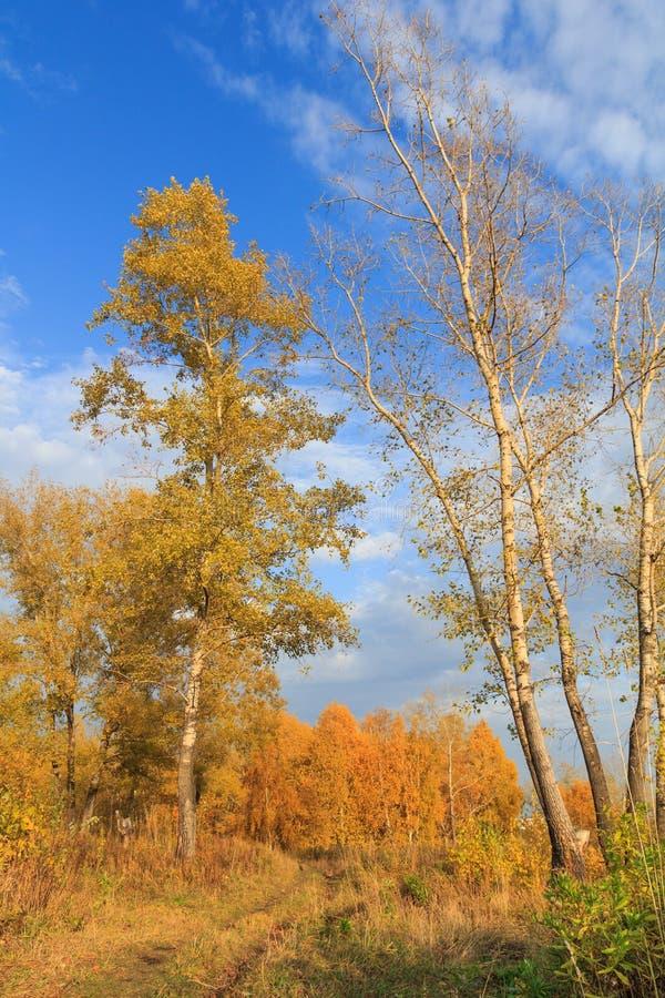 Foto de un bosque del otoño imagenes de archivo