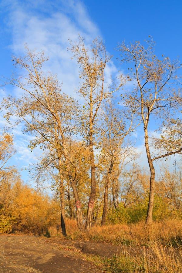 Foto de un bosque del otoño foto de archivo libre de regalías