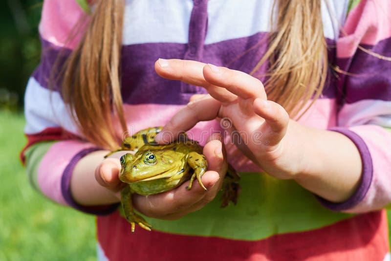 Foto de un cierre de la rana para arriba en una mano del ` s del hombre imagenes de archivo