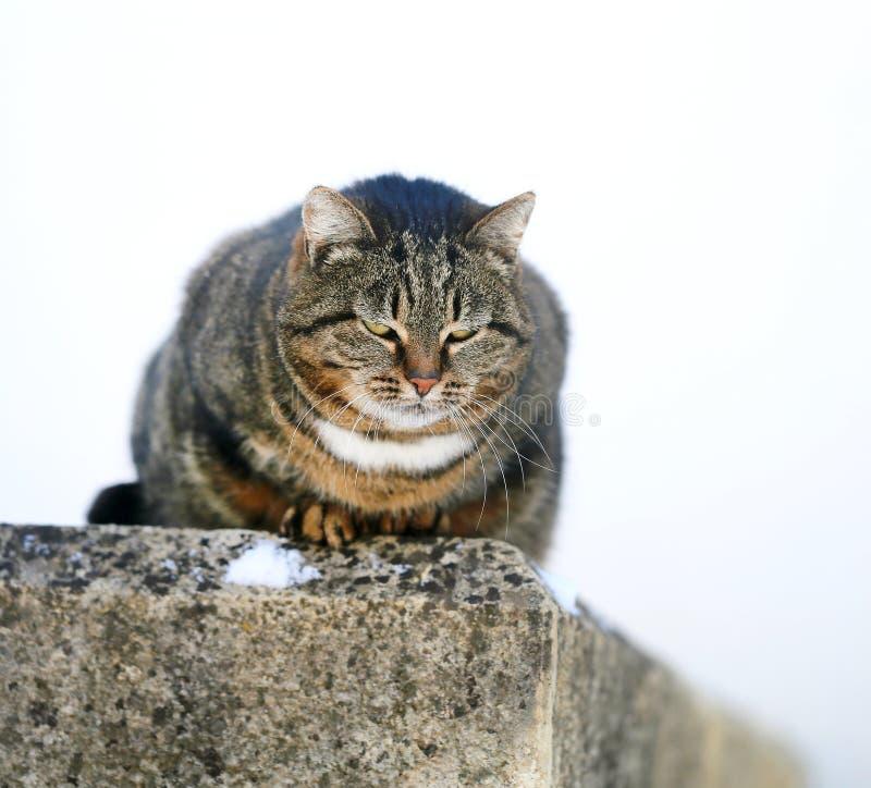 Foto de un gato gordo peludo macro hermoso fotografía de archivo