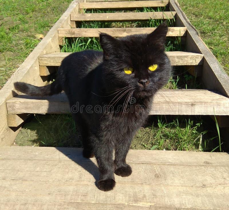 Foto de un gato negro que viene abajo las escaleras de madera en la yarda fotos de archivo