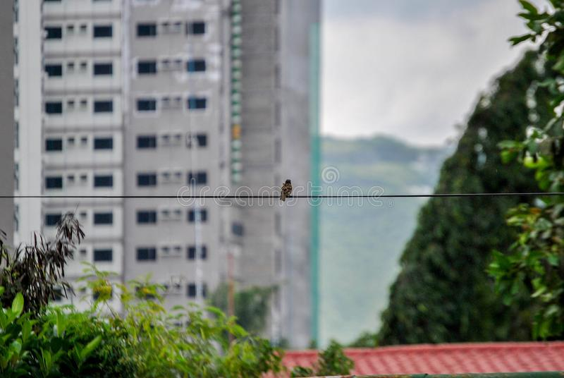 Foto de un pequeño pájaro fotos de archivo libres de regalías