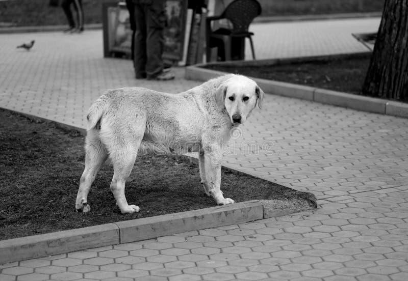 Foto de un perro divertido grande foto de archivo