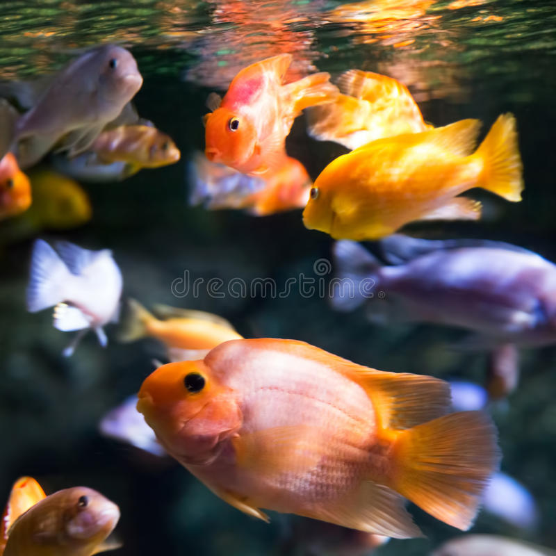 Download Foto De Un Pescado Tropical Imagen de archivo - Imagen de grupo, coral: 42431415