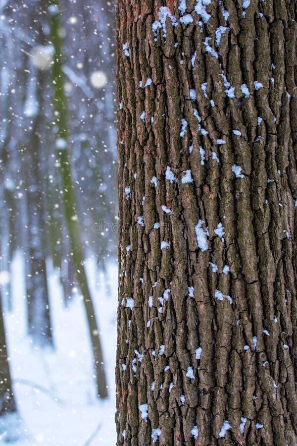 Foto de un tronco de árbol en el bosque en invierno con nieve que cae imagenes de archivo