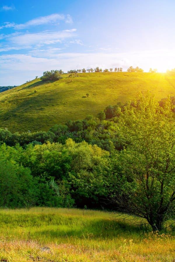 Foto de una colina hermosa y de una hierba verde fotos de archivo