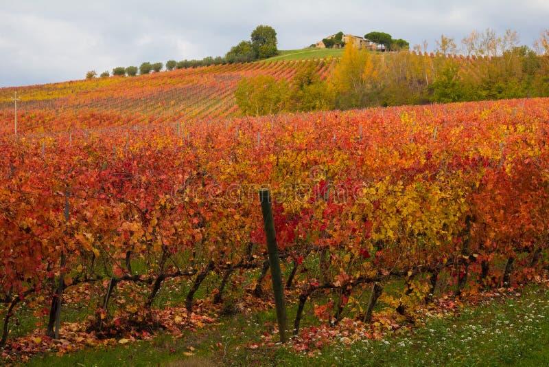 Foto de vinhedos outonais, Borgonha fotos de stock royalty free