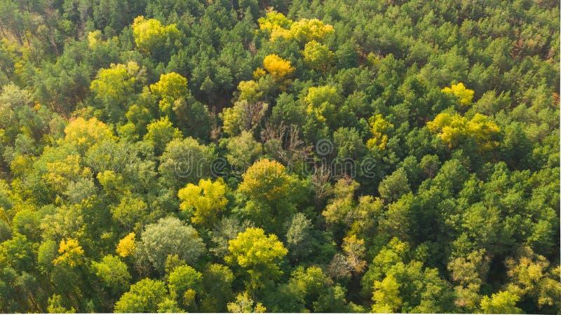 Foto de vista aérea de floresta multicolorida no dia do outono imagem de stock royalty free