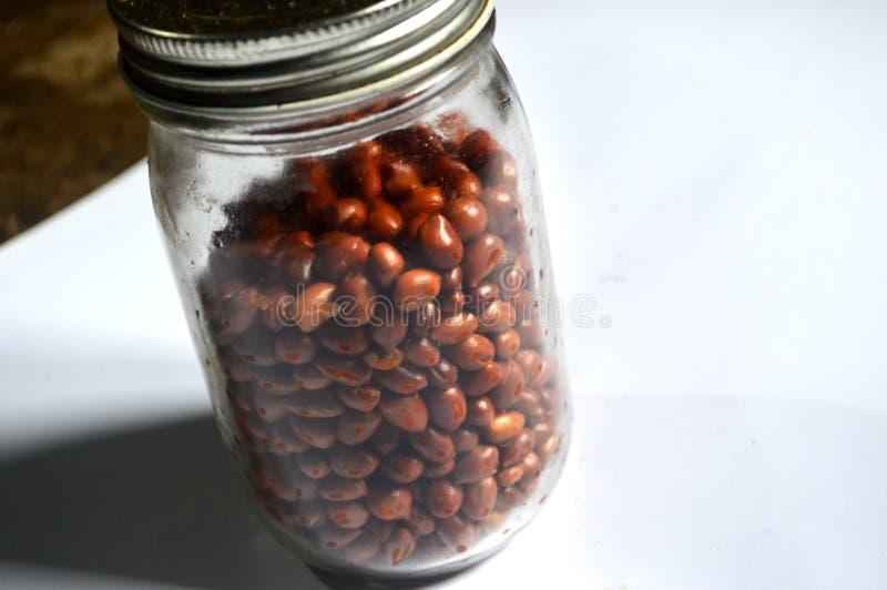Foto dei fagioli in un barattolo con un fondo bianco fotografia stock