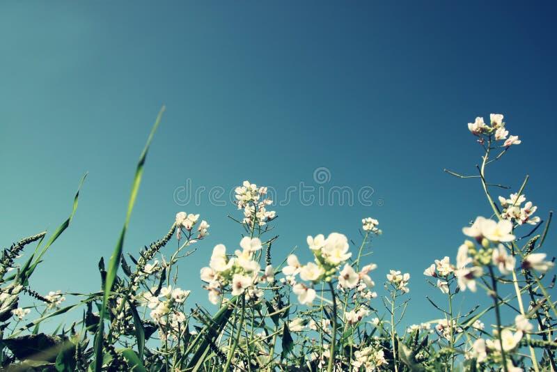 Foto del ángulo bajo de flores contra el cielo azul quebradizo Foco selectivo imagen de archivo