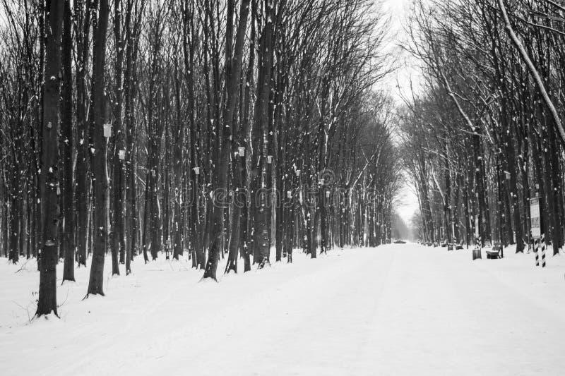 Foto del camino nevado en el parque en invierno foto de archivo libre de regalías