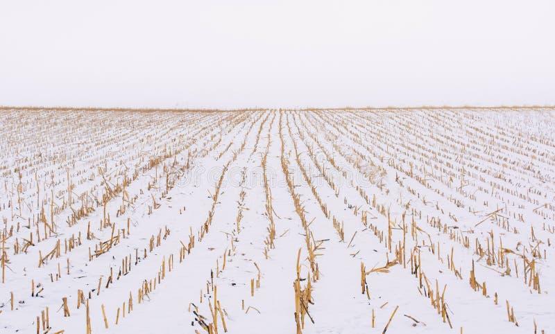 Foto del campo agrícola cubierta con nieve en invierno fotos de archivo