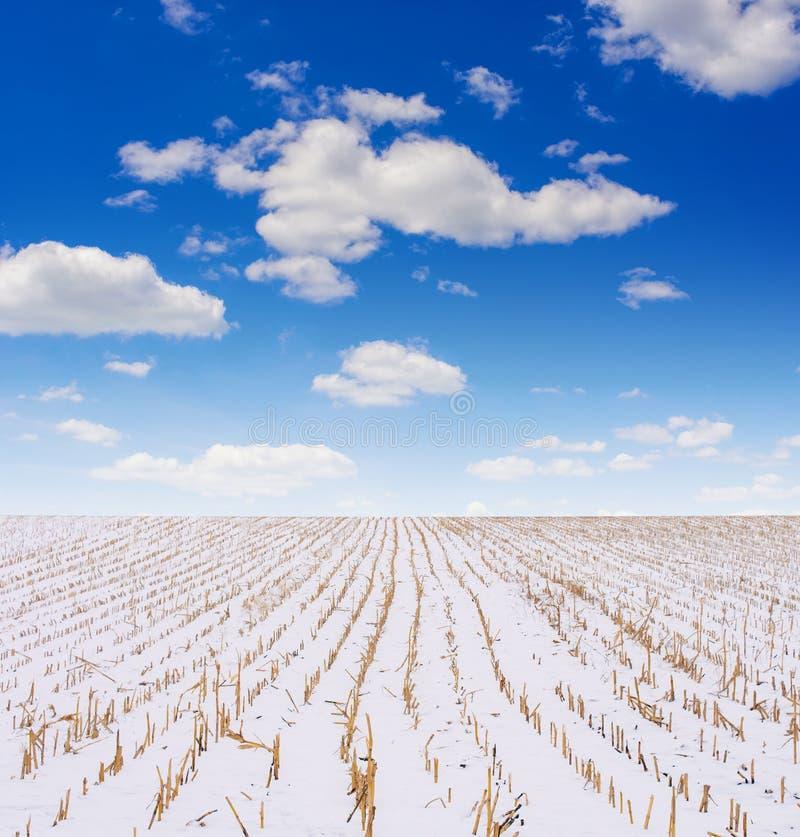 Foto del campo agrícola cubierta con nieve en invierno imágenes de archivo libres de regalías