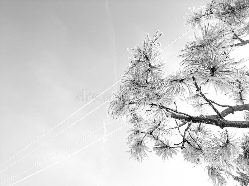 Foto del cielo e dell'albero fotografia stock