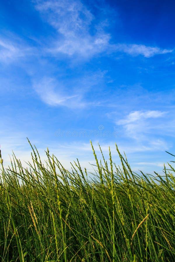 Foto del cielo y de la hierba fotografía de archivo