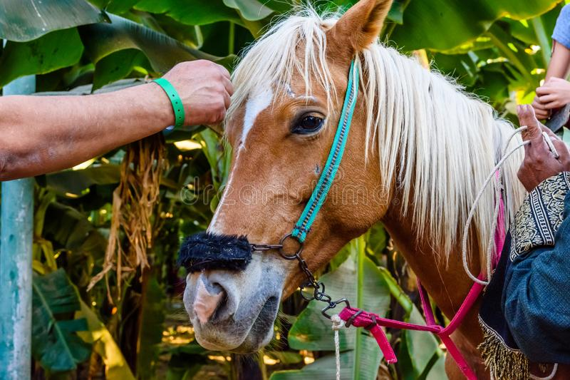 Foto del dettaglio di giovane profilo del cavallo fotografia stock libera da diritti
