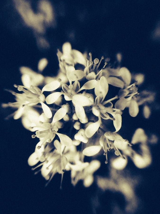 Foto del fiore del fiore macro con un insetto su  fotografia stock