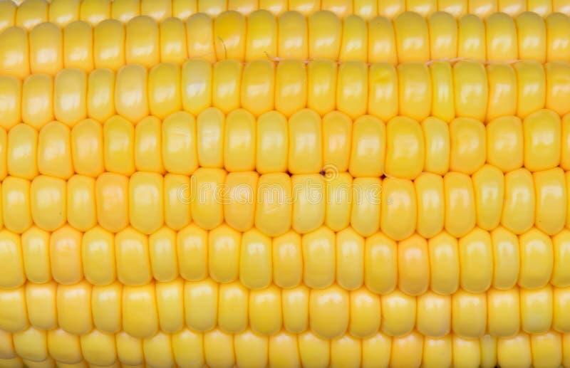 Foto del fondo amarillo del maíz, fondos abstractos, imagen de archivo libre de regalías