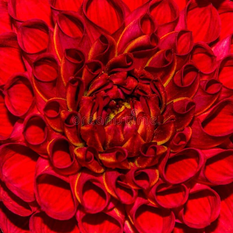 Foto del fondo de la flor del extracto del primer, una textura de la flor fotos de archivo