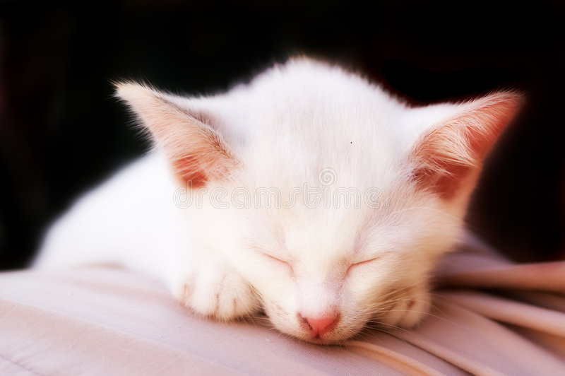 Foto del gato - sueño angelical - fondo negro imagen de archivo
