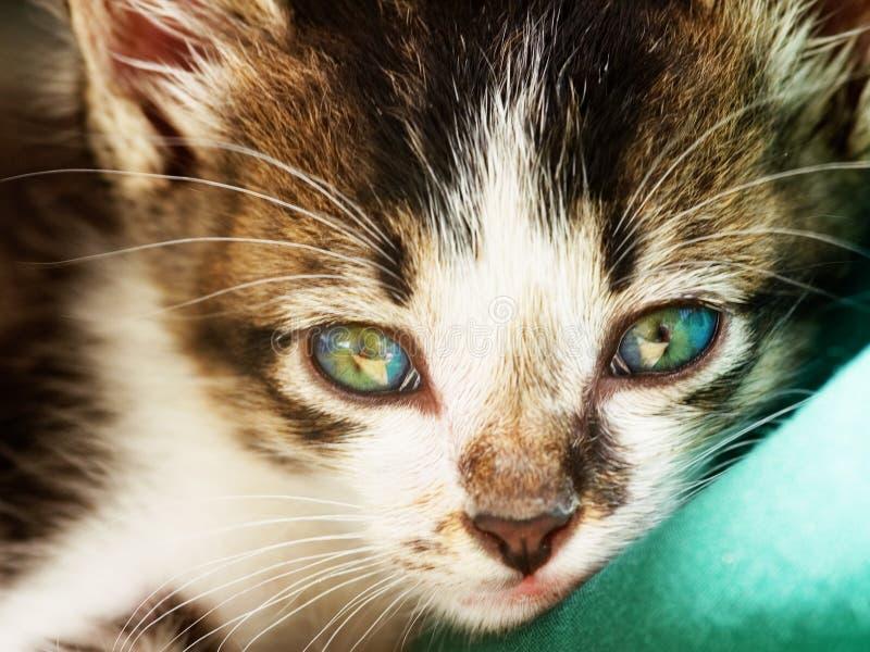 Foto del gatto - sguardo intenso fotografia stock libera da diritti