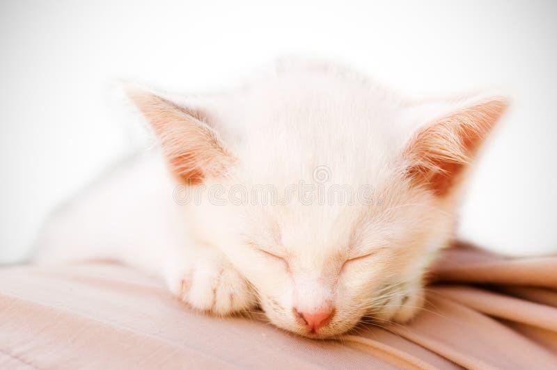 Foto del gatto - sonno angelico immagini stock libere da diritti