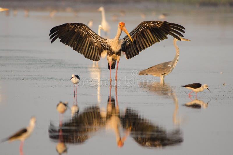 Foto del pájaro imagen de archivo libre de regalías