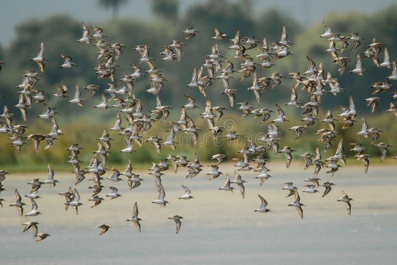 Foto del pájaro fotografía de archivo