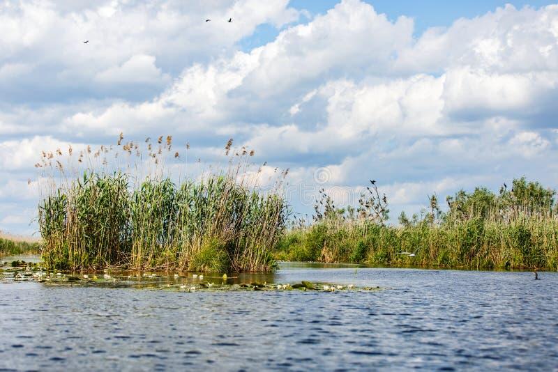 Foto del paesaggio del delta di Danubio immagine stock