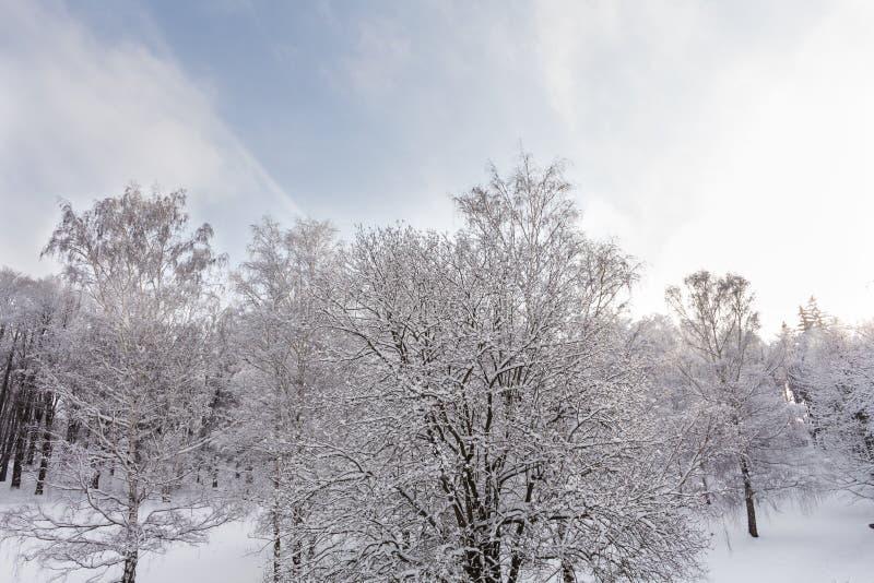 Foto del paisaje nevoso con el cielo azul y el camino en invierno imagenes de archivo