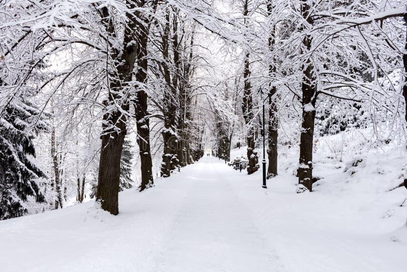 Foto del paisaje nevoso cubierta con nieve y el camino en invierno fotos de archivo libres de regalías